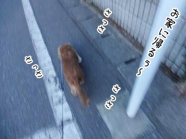 kinako2329.jpg