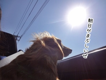 kinako2335.jpg