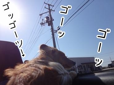 kinako2337.jpg