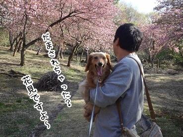 kinako2354.jpg
