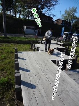 kinako2358.jpg
