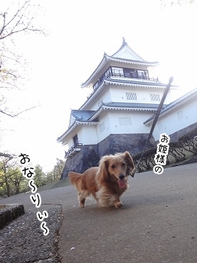 kinako2361.jpg