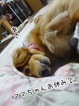 kinako2372.jpg