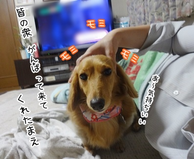 kinako2374.jpg