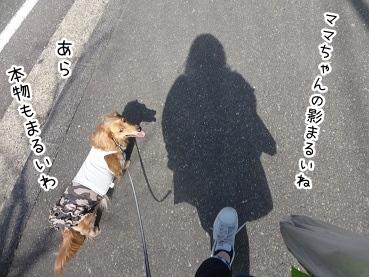 kinako2379.jpg
