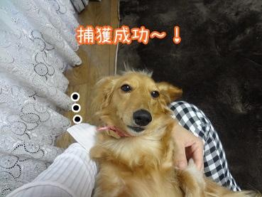 kinako2388.jpg