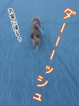 kinako2395.jpg