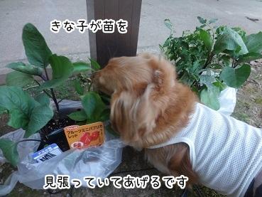 kinako2396.jpg