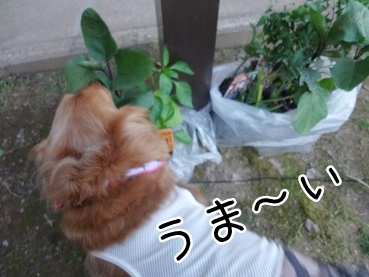 kinako2398.jpg