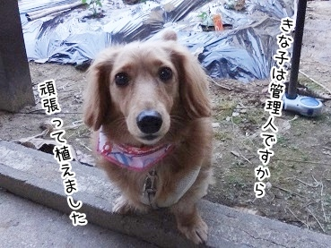 kinako2399.jpg