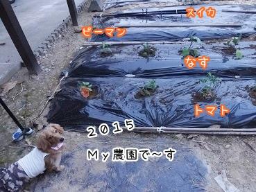 kinako2400.jpg