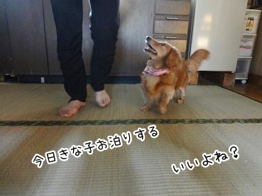 kinako2404.jpg