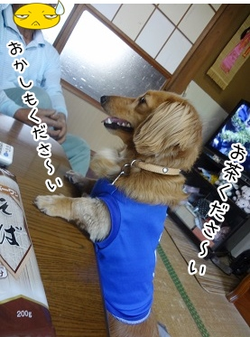 kinako2428.jpg