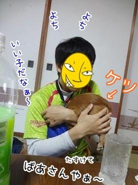 kinako2440.jpg