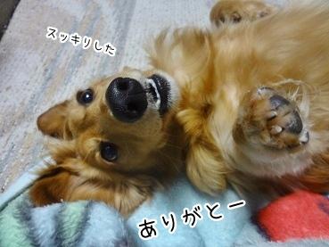 kinako2454.jpg