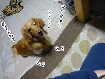 kinako2458.jpg