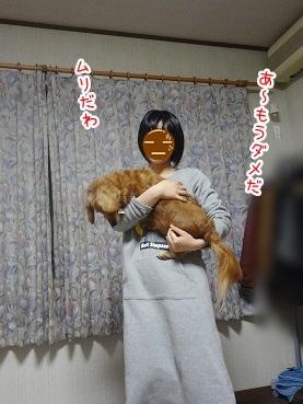 kinako2476.jpg