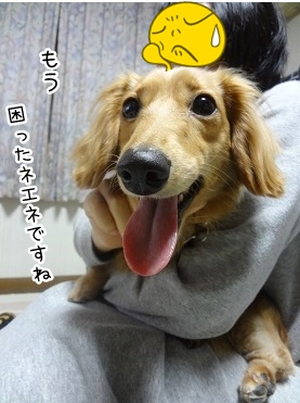 kinako2478.jpg