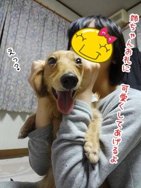 kinako2481.jpg