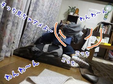 kinako2483.jpg