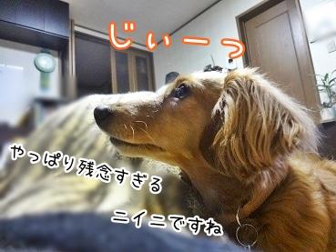 kinako2485.jpg