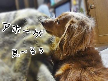 kinako2489.jpg