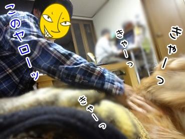 kinako2491.jpg