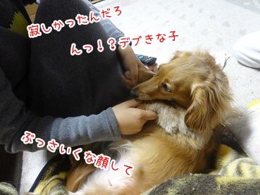 kinako2502.jpg