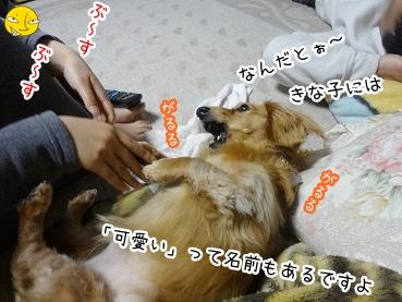 kinako2503.jpg