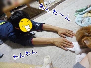 kinako2520.jpg