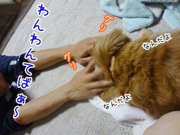 kinako2521.jpg