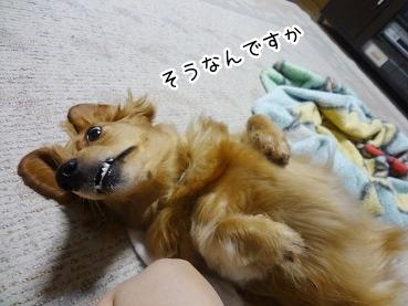 kinako2524.jpg
