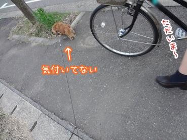 kinako2529.jpg