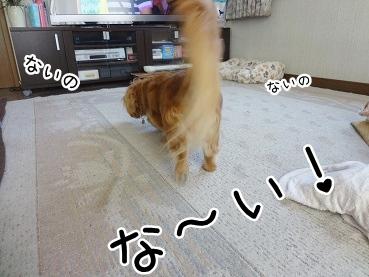 kinako2560.jpg