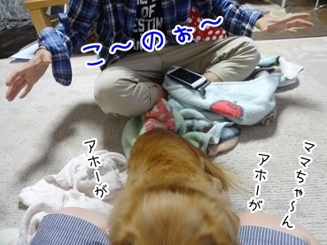 kinako2582.jpg