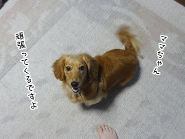kinako2586.jpg