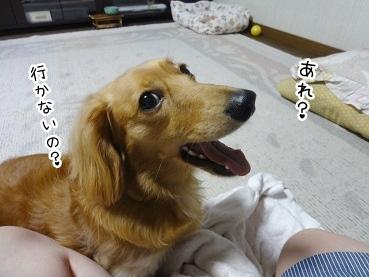 kinako2587.jpg