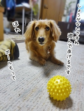 kinako2590.jpg