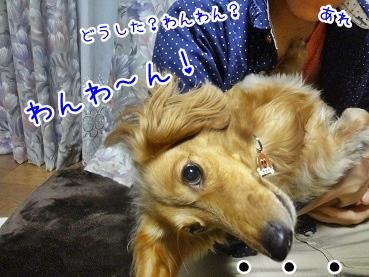 kinako2597.jpg