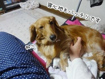 kinako2613.jpg