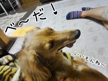 kinako2623.jpg