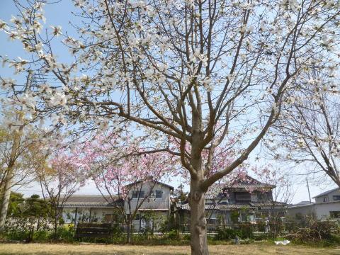 春の庭(1)
