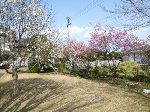 春の庭(2)
