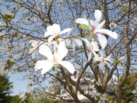 春の庭(3)