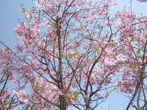 春の庭(4)