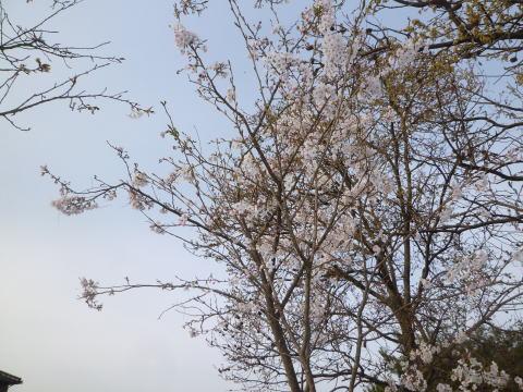 春の庭(5)