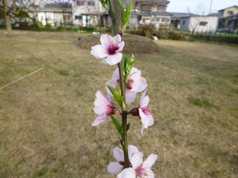 春の庭(6)