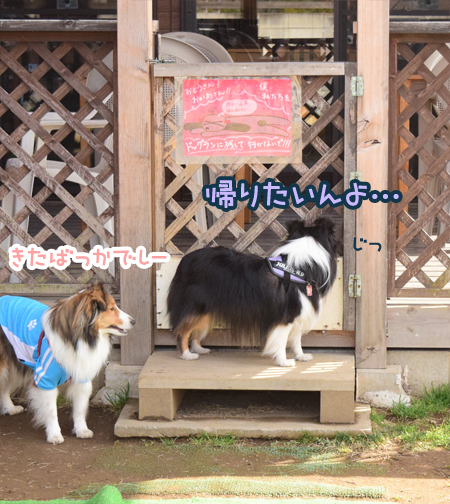 DSC_0741_20150311220704852.jpg