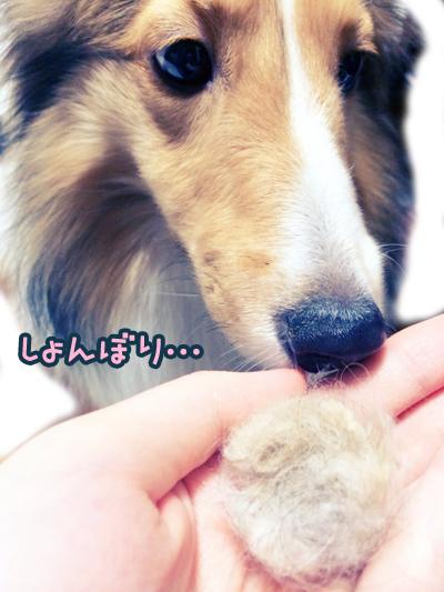 S__8323075.jpg