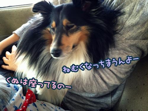S__9945096.jpg